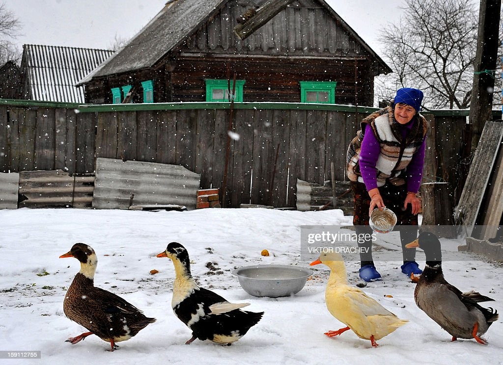 A woman feeds gooses under snow fall in Pererov, some 270 kms south of Minsk, Belarus, on January 8, 2013.