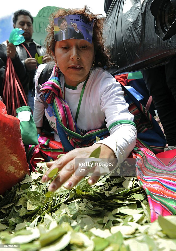 A woman fills bags with coca leaves during a celebration for the reincorporation of Bolivia to the UN Convention Against Illicit Traffic in Narcotic Drugs in La Paz on January 14, 2013. 'The coca leaf is not any more seen as cocaine (..), it is a victory of our identity' said Bolivian President Evo Morales. AFP PHOTO/Jorge Bernal
