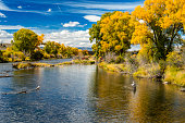 A lone woman fly-fishing in the Colorado River in the fall.  Image captured near Parshall, Colorado in the Rocky Mountains.