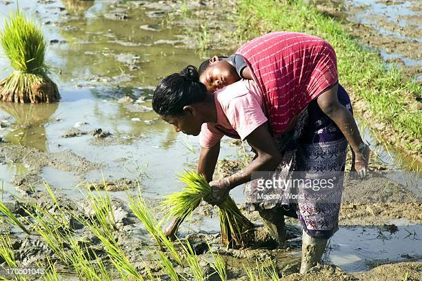 A woman from the ethnic Garo community working in a field Haluaghat Mymensingh Bangladesh August 1 2008