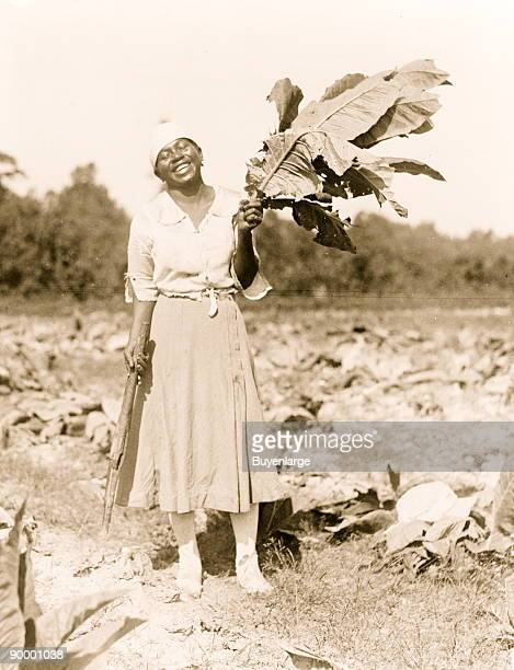 Woman fulllength portrait standing in field facing front holding tobacco leaf in Washington DC area
