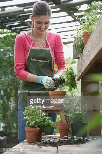 Woman gardening : Photo