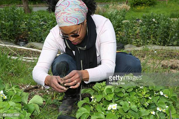 Woman gardening pulling weeds out