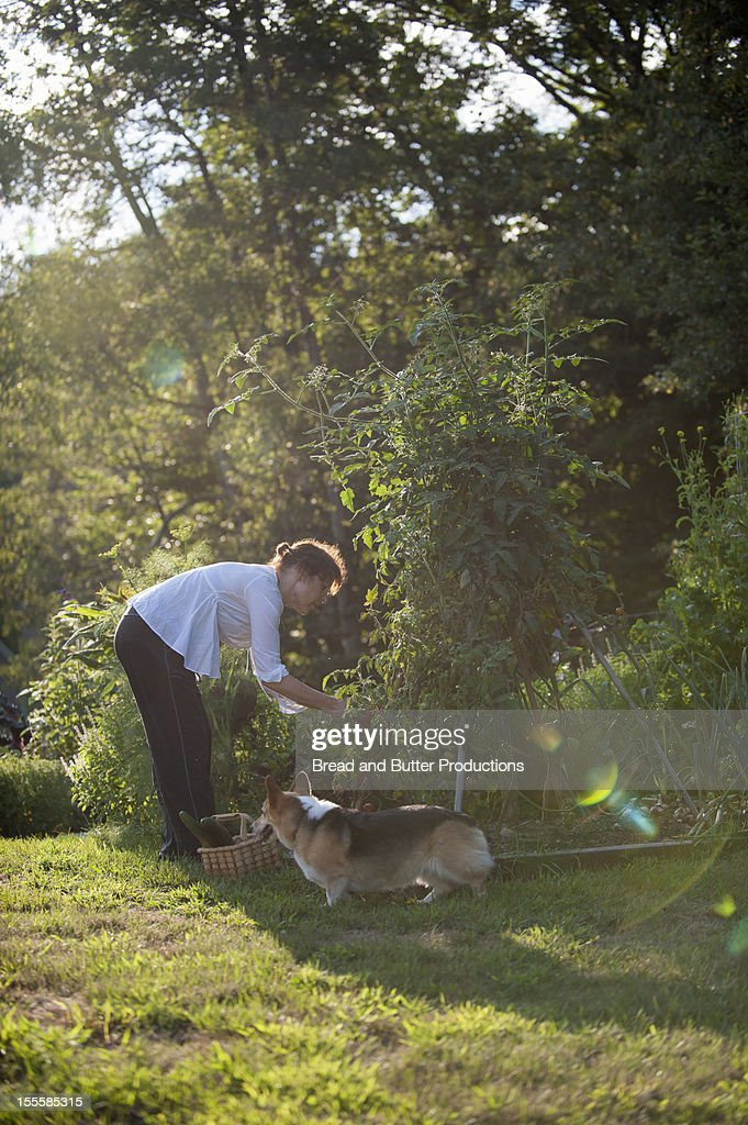 Woman gardening with her dog next to her : Stock Photo
