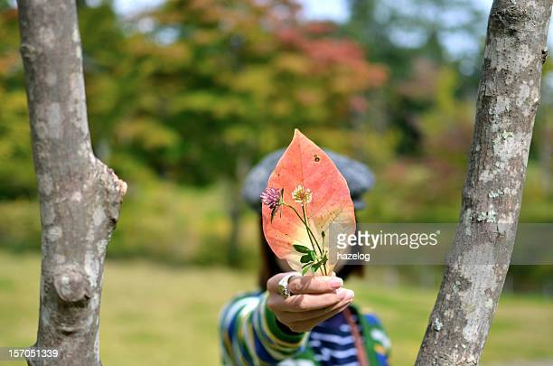 woman gathers the fallen leaves of autumn.
