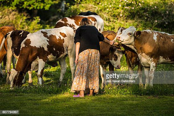 Woman giving flowers to cows