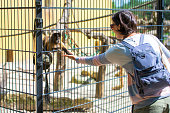 woman giving food to a monkey at zoo
