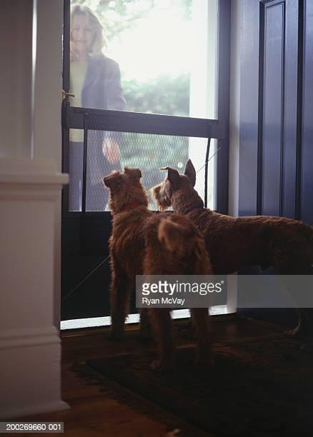 Woman greeting Irish Terriers at door of home