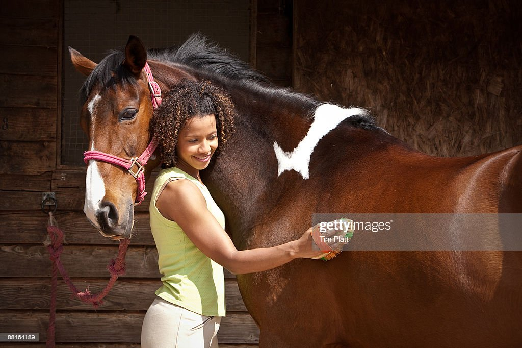 Woman grooming a horse. : Stock Photo