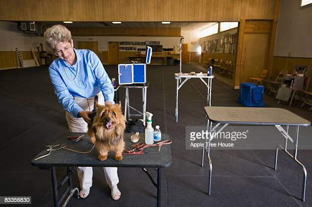 Woman grooming dog before confirmation show