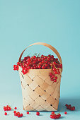 Woman hand holding wooden basket with red currants on blue background. Summer harvest. Healthy eating concept. Toned