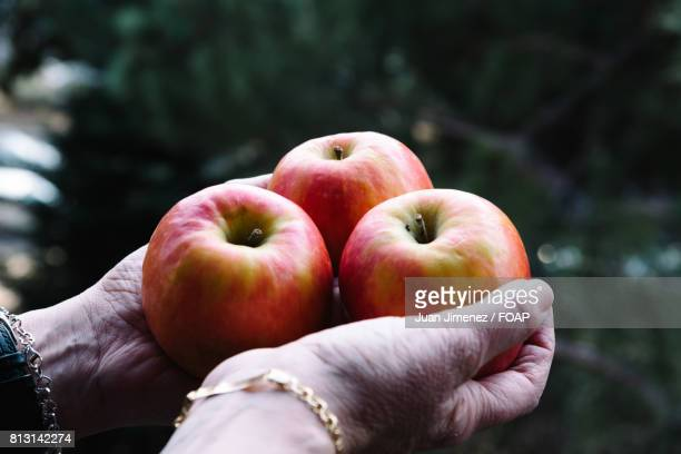 Woman hands holding three apples