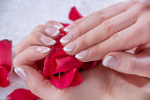 Girl hands with french manicure style and modern nails polish holding red rose petals in studio. Beauty and Manicure concept. Close up, selective focus