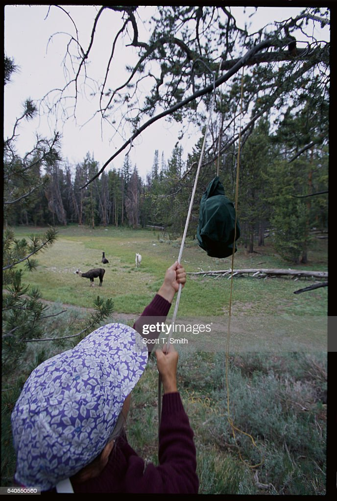 Woman Hanging Food from Tree