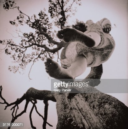 Woman Hanging from Tree : Stock Photo
