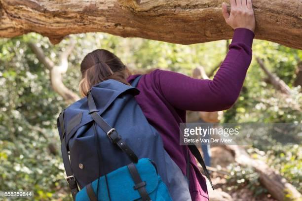 Woman hiking, bending head to walk underneath large tree trunk.