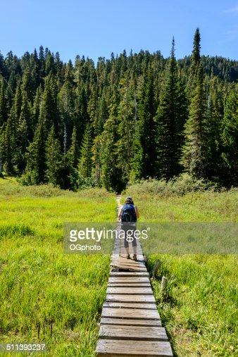 Woman hiking on a board walk trail towards woods -XXXL : Stock Photo