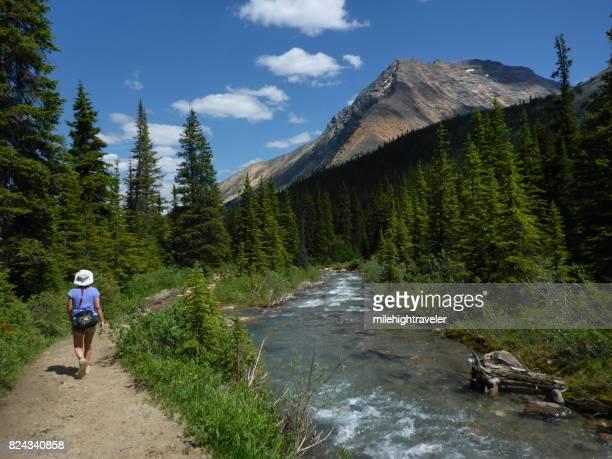 Woman hiking Portal Creek Trail South Jasper Range mountains Jasper National Park Alberta