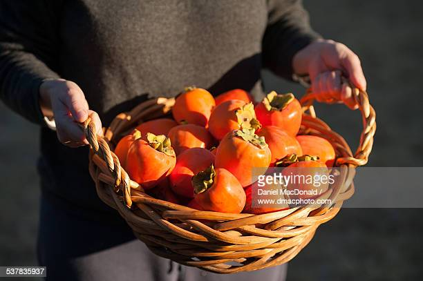 Woman holding a basket of hachiya persimmons