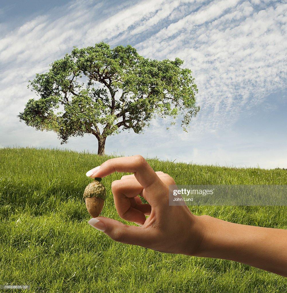 Woman holding acorn in front of oak tree (Digital Composite)