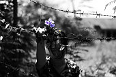 woman holding barb wire and flower in hand.( abuse concept )in white tone