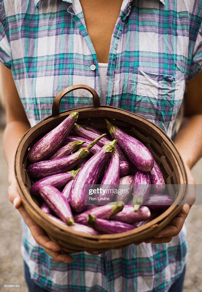 Woman holding basket of eggplants at Organic farm : Stock Photo