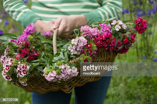 Woman holding basket of flowers mid section close-up : Stock Photo