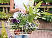 Woman holding basket of plants in garden centre, mid section
