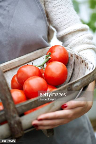 Woman holding basket with tomatoes
