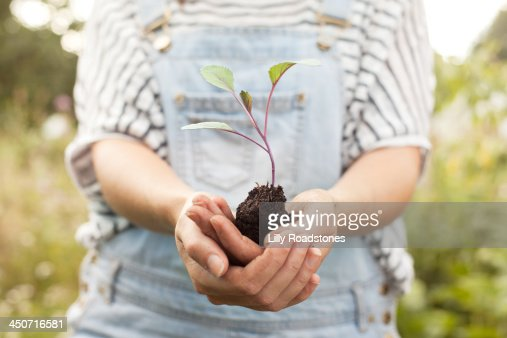 Woman holding broccoli seedling