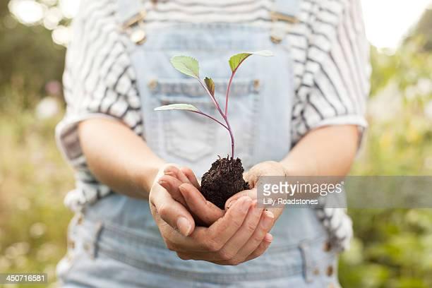 Woman holding broccoli seedling