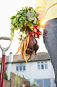 Woman holding bunch of carrots, beetroots and radish in garden, low angle view, mid section
