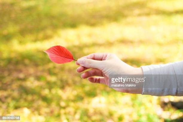 Woman Holding Cherry Leaf