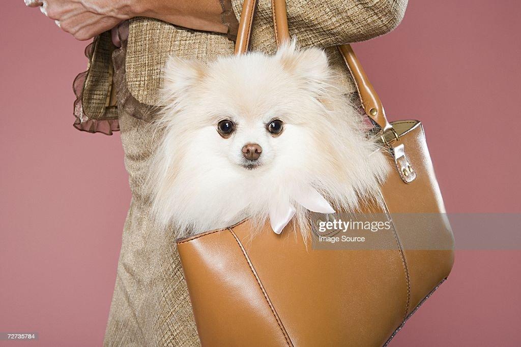 Woman holding dog in a handbag
