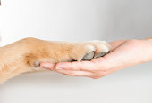 Dog paw and woman's hand on white background.