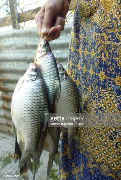 Woman holding fishes
