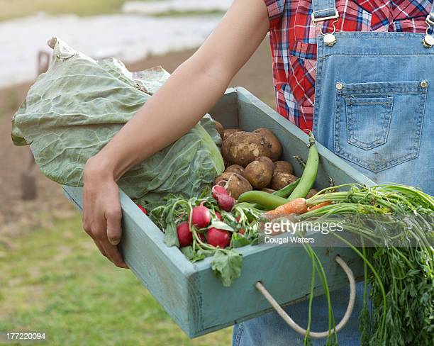 Woman holding freshly cropped vegetables in tray.