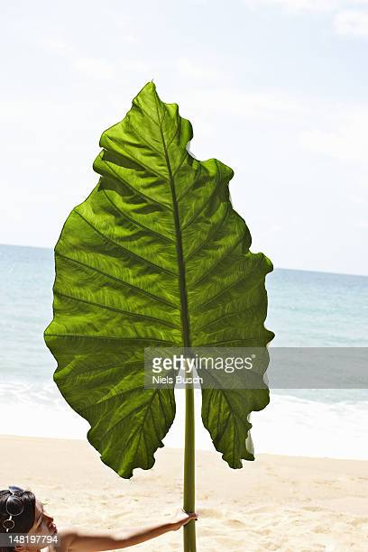 Woman holding oversized leaf on beach