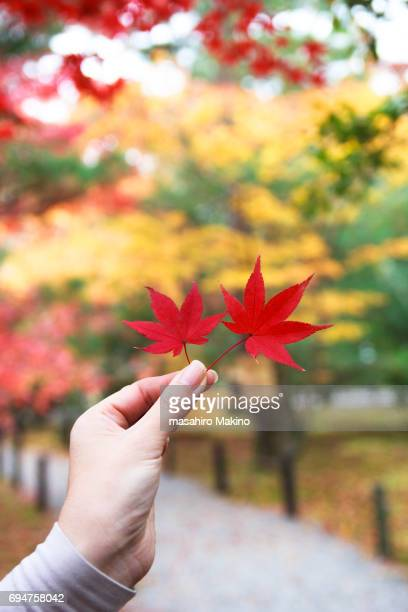 Woman Holding Red Japanese Maple Leaves