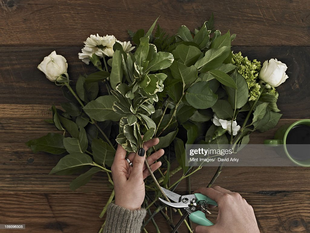 A woman holding secateurs and cutting the base of flower stems for a flower arrangement of white roses and green foliage. : Stock Photo