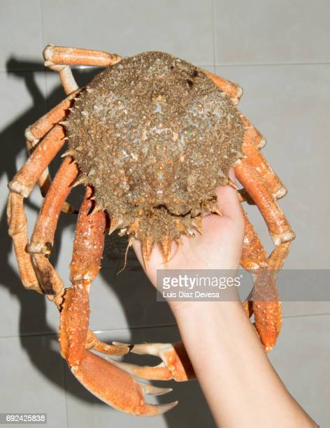 woman holding spider crab