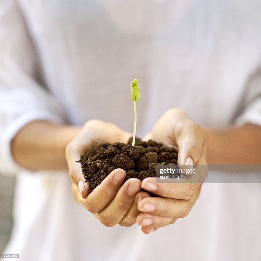 Woman holding sprout in dirt : Stock Photo