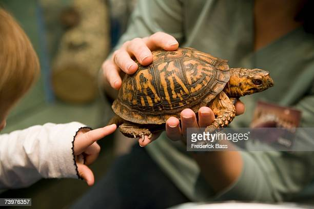 Woman holding tortoise and child pointing