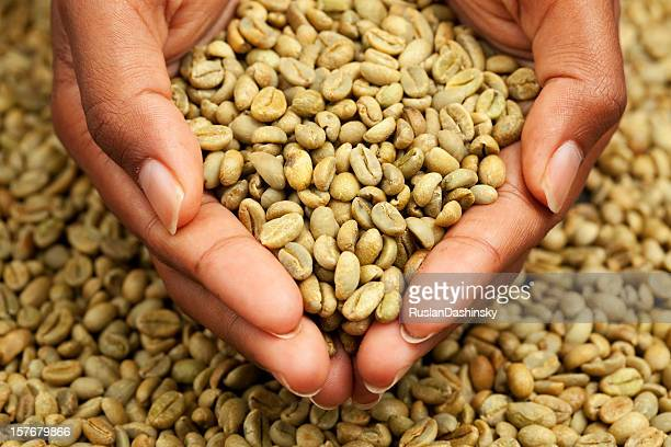 Woman holding un-roasted coffee beans.