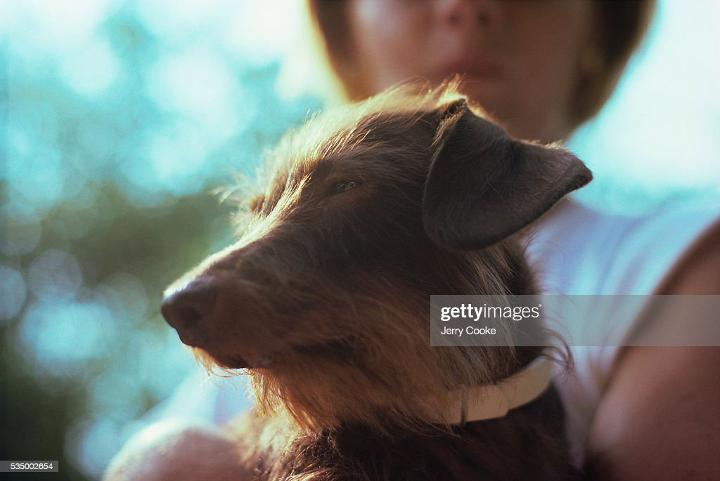 Woman Holding Wirehaired Dachshund