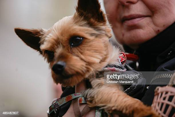 A woman holds a dog in her arms during the ecumenical Good Friday procession on April 18 2014 in Berlin Germany Under the theme of 'Reformation and...