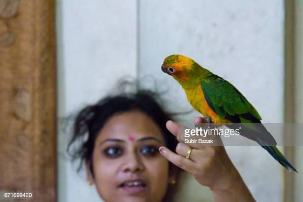 A woman holds captive Sun Parakeet (Aratinga solstitialis)