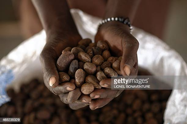 A woman holds shea nuts on a shea butter production line for the French cosmetics company L'Occitane in Leo southcentral Burkina Faso on January 24...