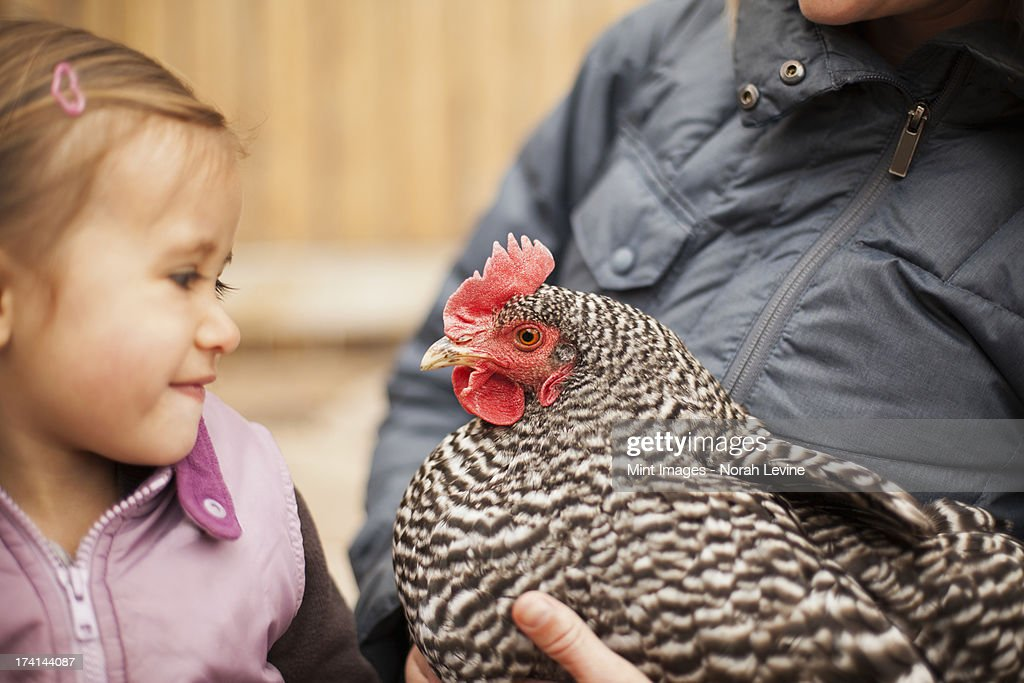 A woman in a grey coat holding a black and white chicken with a red coxcomb under one arm. A young girl beside her holding closely at the chicken. : Stock Photo
