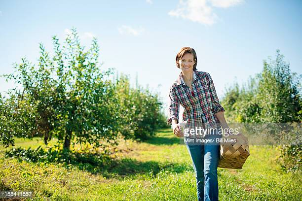 A woman in a plaid shirt picking apples in the orchard at an organic fruit farm, carrying a wicker basket.